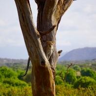 kenya2016-53